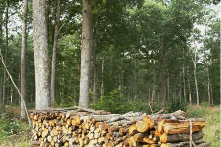 photo de coupe de bois