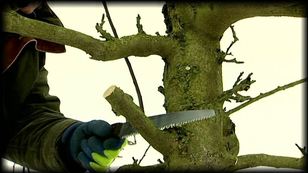 photo de taille arbres par j Patricot